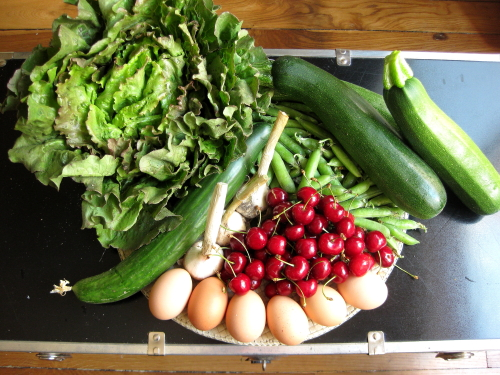Lettuce, zucchini, peas, cherries, eggs, fresh garlic, cucumber