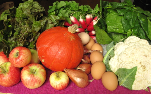 lettuce, radishes, spinach, cauliflower, eggs, shallots, potimarron, apples